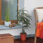 Comment choisir ses plots pour terrasse en bois ?