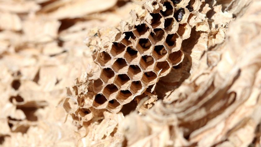Comment se débarrasser des nids de guêpes ?